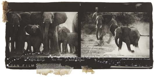 Artist Peter Beard - FindArtinfo
