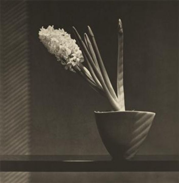Artist Robert Mapplethorpe - FindArtinfo