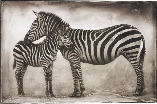 Artist Nick Brandt - FindArtinfo